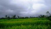 TJUB079-land-for-sale-in-ubud-bali