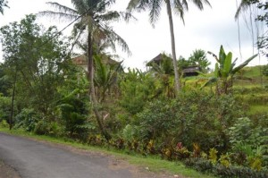 Land for sale in ubud 1