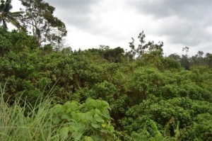 Land for sale in ubud 4