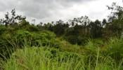 TJUB009 land for sale in ubud bali 02