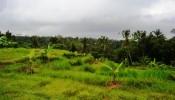 TJUB083 land for sale in ubud bali 02