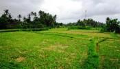 TJUB084 land for sale in ubud bali 18