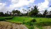 TJUB095 land for sale in ubud bali 01