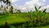 TJUB002 land for sale in ubud bali 02