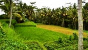 TJUB017 land for sale in ubud bali 05