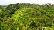 TJUB033 land for sale in ubud bali 06