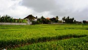 TJUB036 land for sale in ubud bali 09
