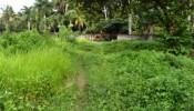 TJUB039 land for sale in ubud bali 06