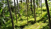 TJUB047 land for sale in ubud bali 09