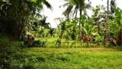 TJUB055 land for sale in ubud bali 07