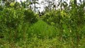 TJUB058 land for sale in ubud bali 06