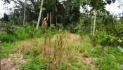 TJUB059 land for sale in ubud bali 12
