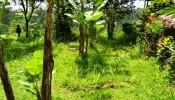TJUB065 land for sale in ubud bali 02