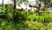 TJUB065 land for sale in ubud bali 04