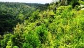 TJUB065 land for sale in ubud bali 05