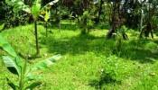 TJUB065 land for sale in ubud bali 15