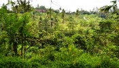 TJUB069 land for sale in ubud bali 01