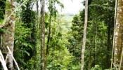 TJUB069 land for sale in ubud bali 07