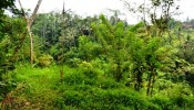 TJUB069 land for sale in ubud bali 12
