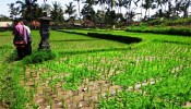 TJUB087 land for sale in ubud bali 01