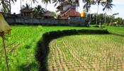TJUB087 land for sale in ubud bali 04