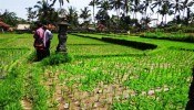 TJUB087 land for sale in ubud bali 20