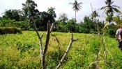 TJUB088 land for sale in ubud bali 06