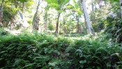TJUB089 land for sale in ubud bali 04