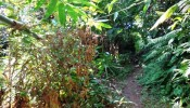 TJUB089 land for sale in ubud bali 14