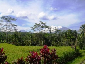 land for sale in Ubud Tegalalang, Bali