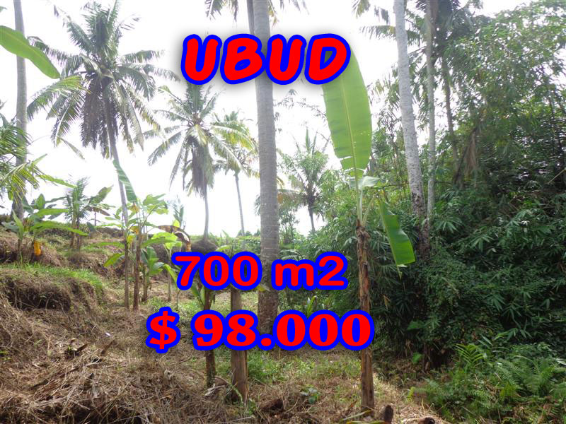 9. Land for sale in Canggu land