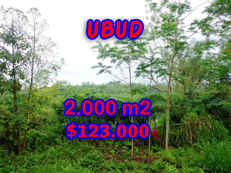 -Land-for-sale-in-Ubud-land