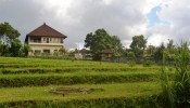TJCG114 land for sale in Canggu Bali