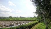 Ubud Land for sale in Ubud Bali