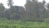 Bali land for sale in Ubud Bali land for sale in Ubud