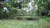 land sale in Ubud Bali