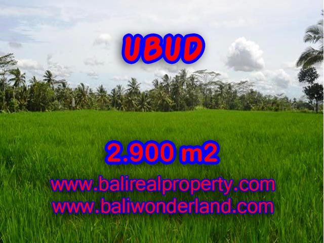 Land for sale in Ubud, Stunning view in Ubud Payangan Bali – TJUB356