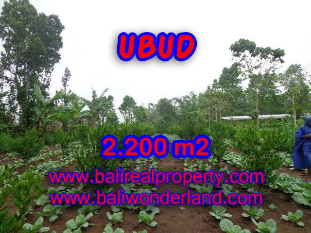 Land in Ubud for sale, Attractive view in Ubud Tegalalang Bali – TJUB348