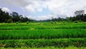 Land for sale in Ubud Bali TJUB377
