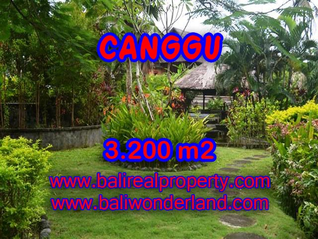 Extraordinary Land for sale in Canggu Bali, Rice fields and river view in Canggu– TJCG129