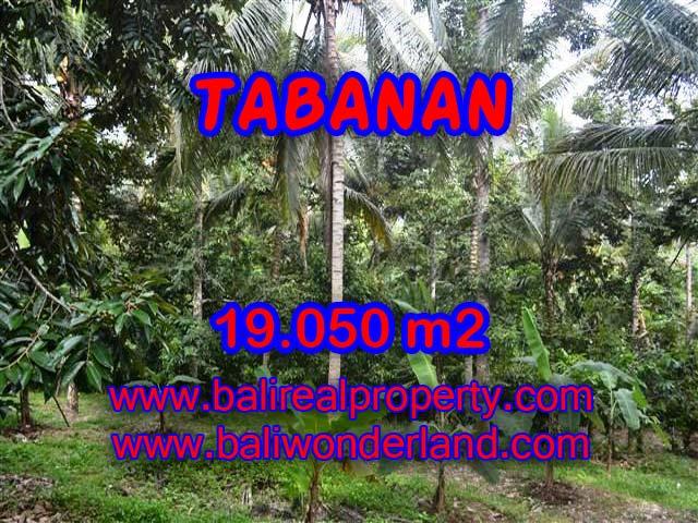 Land for sale in Tabanan, Stunning view in Tabanan soka Bali – TJTB092