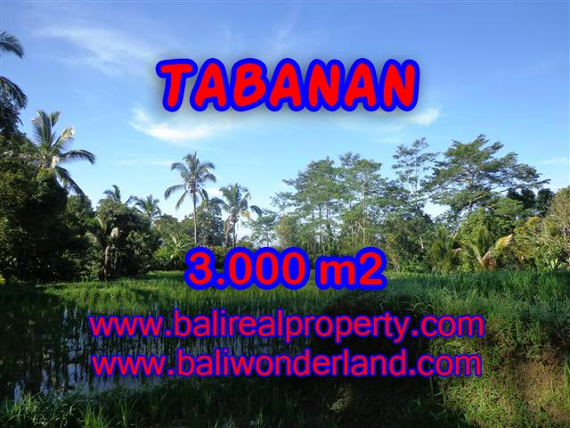 Fantastic Land for sale in Bali, Rice fields and mountain view in Tabanan Penebel– TJTB110