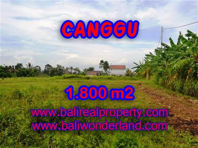 Magnificent Land for sale in Bali, Stunning view rice fields in Canggu Batu Bolong Bali – TJCG134