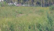 Land for SALE 700 m2 in Ubud, Bali - T1070