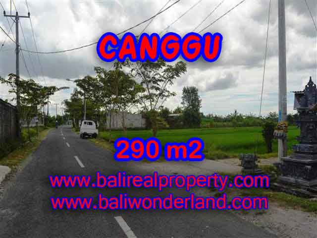 Astounding Property in Bali, Land in Canggu Bali for sale – 290 m2 @ $ 395