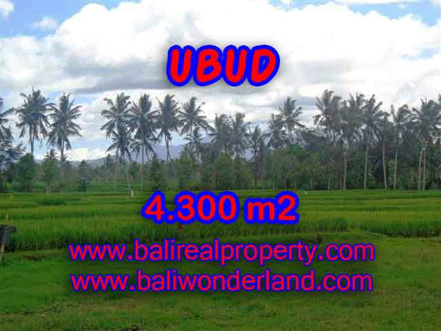 Splendid Property for sale in Bali, LAND FOR SALE IN UBUD Bali  – 4.300 m2 @ $ 235