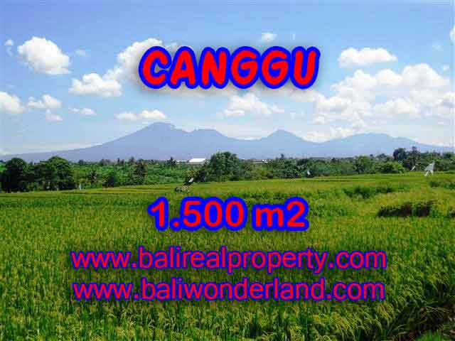 Stunning Land for sale in Bali, Rice fields and mountain view in Canggu Bali - TJCG144