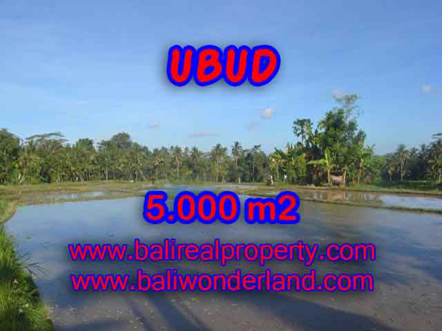 Extraordinary Land for sale in Ubud Bali, Mountain and ricefields view in Ubud Payangan– TJUB413