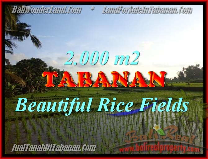 Land for sale in Tabanan Bali, Great view in Tabanan Penebel – TJTB151