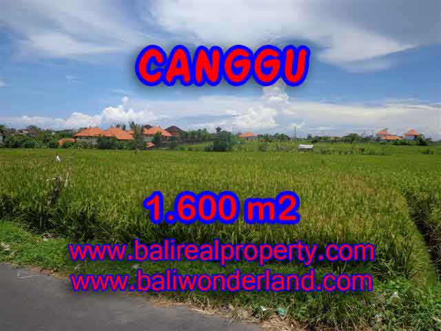Fantastic Land for sale in Bali, Paddy view closed to the beach in Canggu Cemagi – TJCG139